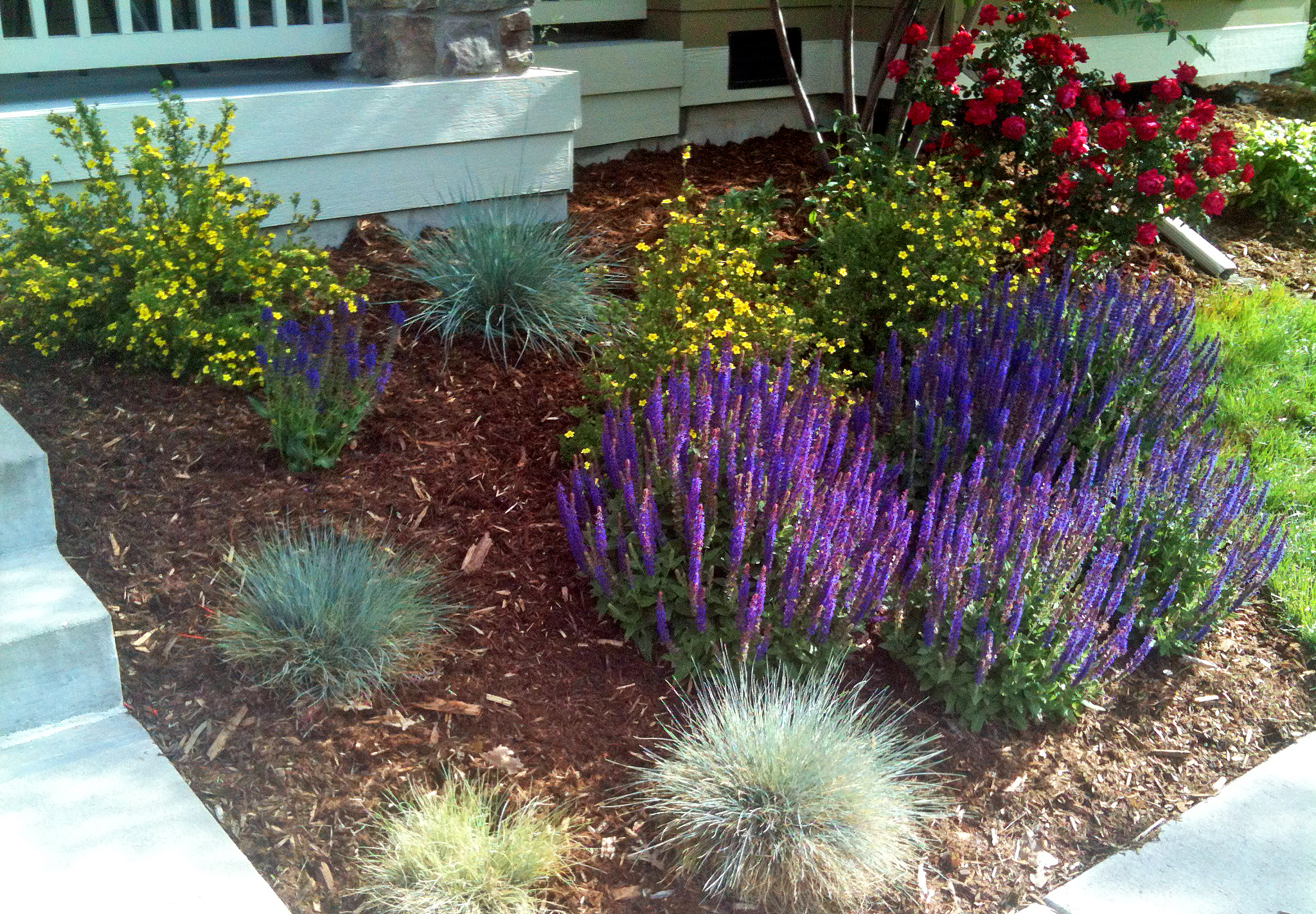 Maintenance Gardening Services City Floral Landscaping